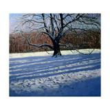 Large Tree, Snow, Calke Abbey