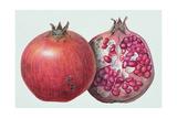 Pomegranate, 1995