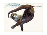Otter Study II -'Talisker'