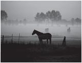 Grazing in the Mist