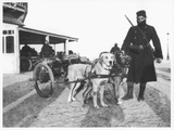 Belgian Machine Guns Pulled by Dogs, 1914