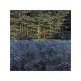 Shadowed Meadow Sunlit Pines