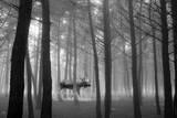 Forest Moose