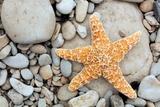 Starfish on a Beach