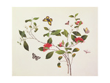 Plant Study with Butterflies and Insects, C.1800