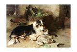 Motherless: the Shepherd's Pet, 1897