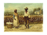 Picked Cotton