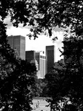 Natural Heart Formed by Trees Overlooking Buildings, Central Park in Summer, Manhattan, New York