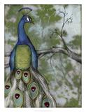 Peacock Reflections II