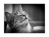 Happy Smiling Cat Portrait In Black And White