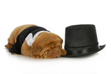 Formal Dog - Dog Dressed Up In Black Suit And Tie Laying Beside Top Hat