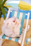 Lazy Summer Holidays