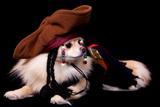 Pomeranian Pirate