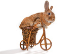 Photo Of Cute Brown Rabbit Riding Bike Isolated On White