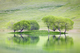 Trees on Island Reflect in Black Butte Reservoir, California, USA