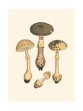 Curtis Mushrooms II