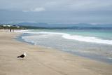 Indian Ocean Shoreline, Mosselbay, Garden Route, Western Cape, South Africa, Africa