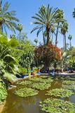 Pond and Palm Tree
