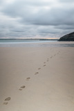 Footsteps in the Sand, Carbis Bay Beach, St. Ives, Cornwall, England, United Kingdom, Europe
