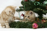 Two Ginger Kittens Playing with Decorations in a Christmas Tree