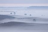 View over New Forest Lowland in Mist at Dawn. Vereley Hill, Burley, New Forest Np, England, UK