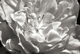 Fancy Flower I