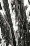 Shedded Bark II