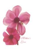 Magnolia Pair