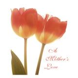 Orange Tulips Quoted