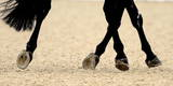 Equestrian Dressage Competition
