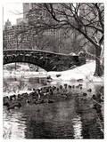 The Gapstow Bridge of Central Park in Winter, Manhattan in New York City