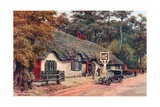 Cat and Fiddle Inn, New Forest