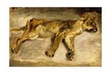 A Sleeping Lioness, C.1830