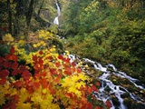 Waterfall Running Through Forest in Autumn