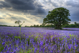 Beautifully Detailed and Vibrant Lavender Field Landscape at Sunset