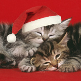 2 Kittens One Sleeping Wearing Christmas Hats