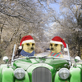 Meerkats Driving Car Through Snow Scene Wearing