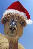 Alpaca Wearing Christmas Hat