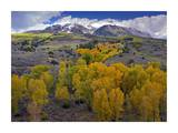 Fall colors at Chair Mountain, Colorado