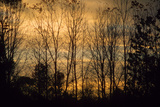 Colorful sunset sky thru bare branches of Eagle Creek Park, Indianapolis, Indiana, USA