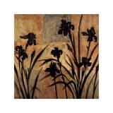 Iris Silhouette II