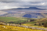 Across Ribblesdale to Ingleborough from Above Stainforth Near Settle, Yorkshire Dales, Yorkshire