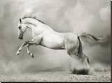 Dreamstate Equus