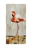 Flamingo IV