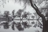 Winter Trees Reflection, Marin County California