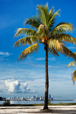 Palm Tree overlooking Downtown Miami - Florida