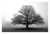 Tree in Mist 2