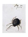 Female Spider, 1578