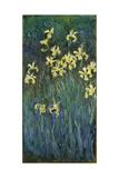 Yellow Irises, 1914-1917