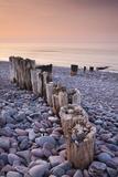 Weathered Wooden Groyne on Bossington Beach at Sunset, Exmoor National Park, Somerset